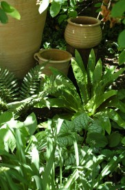 Shade loving plants, such as Hostas, Ferns and Fatsia japonica