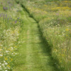 Mown path through wildflower meadow