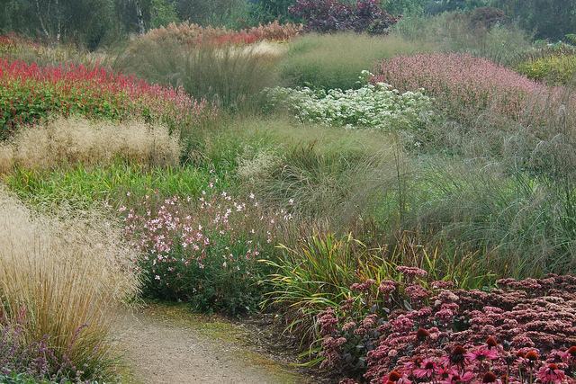 Late flowering perennials and grasses