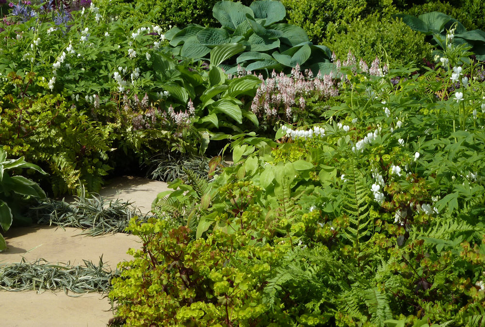 Planting for Shady Areas
