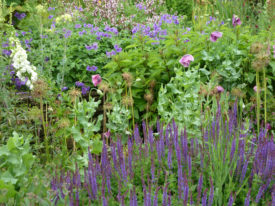 Wildlife-Friendly Planting