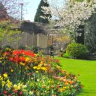 Tulips-at-Abbey-House-Gardens