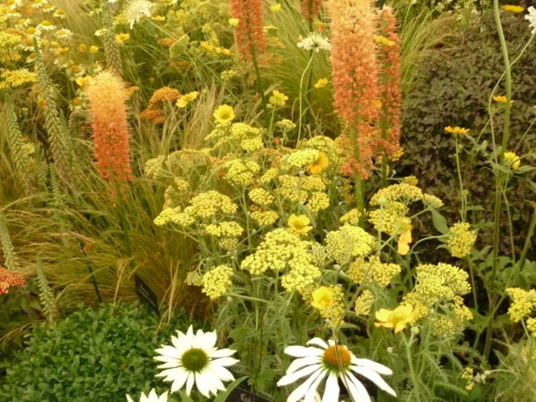 Hot-colours-planting-combination