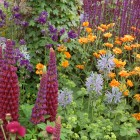 Colour-in-the-Planting-Border