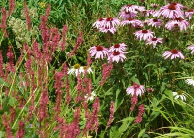 Perfect Match, Echinacea and Persicaria