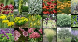 Visual image boards illustrate how plants will work together