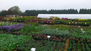 We work with a small selection of specialist trade nurseries