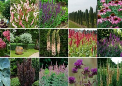 Mood-Board-for-Plants